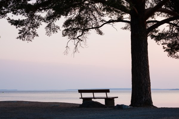 Bench and tree silhouette viewing to serene lake