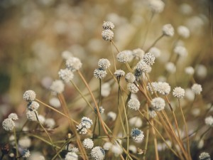 vintage,flowers,color,background,wall,green,nature,light